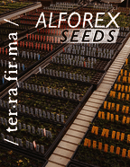 thumbnail of Alforex Seeds