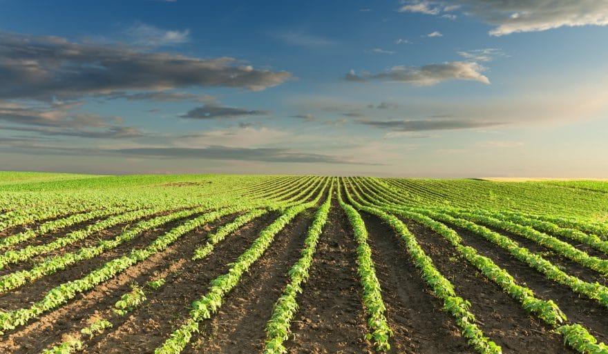 C&B Farms - Terra Firma